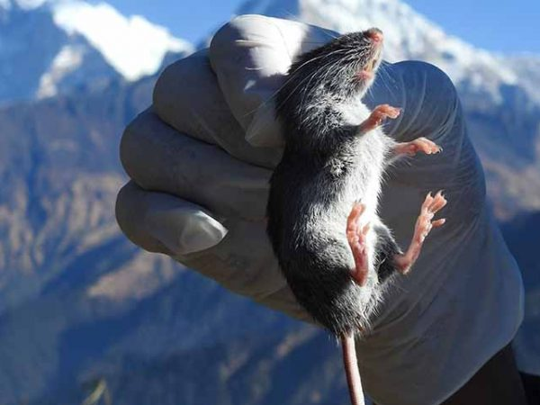 The study of Rodents in Highland Protected Areas