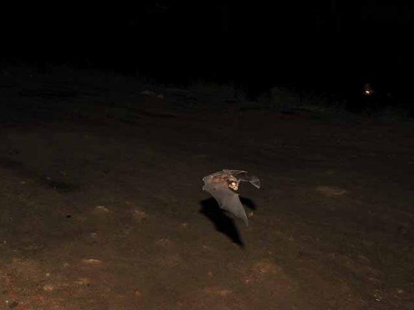 Food Habits of Insectivorous Bats of Mahendra and Nagarjun Caves