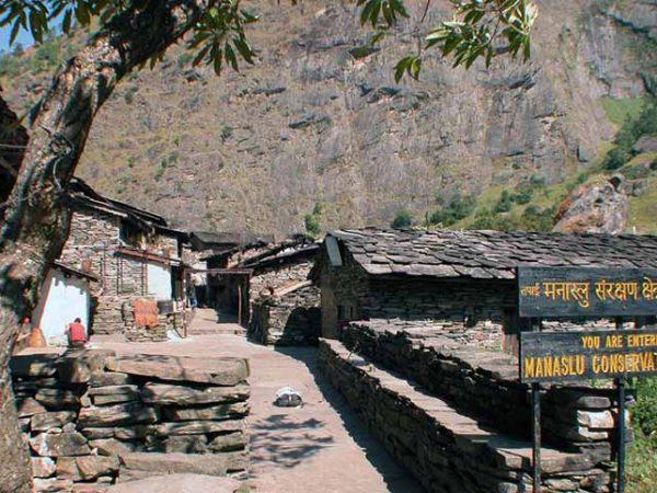 Study of Golden Jackal on human dominated landscape of Manaslu Conservation Area, Nepal