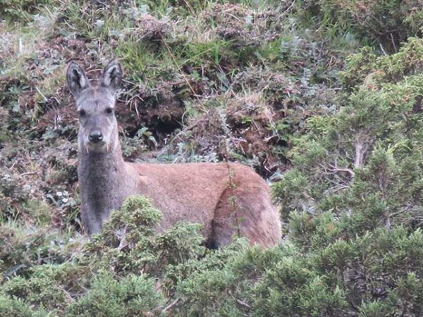 Transforming Local Communities to Citizen Scientists for Local Level Long-Term Conservation of Musk Deer in Manaslu Conservation Area, Nepal